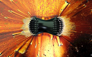 "image credit: Gregory F. Maxwell; <a href=""http://commons.wikimedia.org/wiki/File:Ferrofluid_poles.jpg"" target=""_blank"">image source</a>; <a href=""http://www.compadre.org/Informal/images/features/Ferrofluid_poles-large.jpg"" target=""_blank"">larger image</a>"