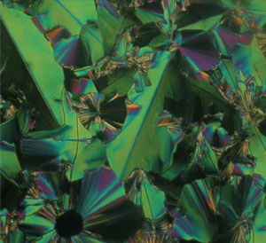 Physics Images: Bent-Core Liquid Crystals image
