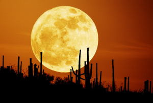 Astronomy Picture of the Day: Saguaro Moon image