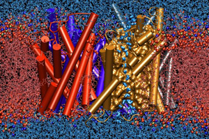 """image credit: Emad Tajkhorshid and Klaus Schulten, Theoretical and Computational Biophysics Group, Beckman Institute, University of Illinois at Urbana-Champaign; <a href= """"http://www.ks.uiuc.edu/Research/aquaporins/"""" target=""""_blank""""> image source</a>"""